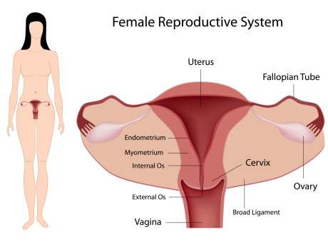 Gynecological surgeries